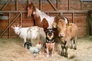 Бизнес на животных