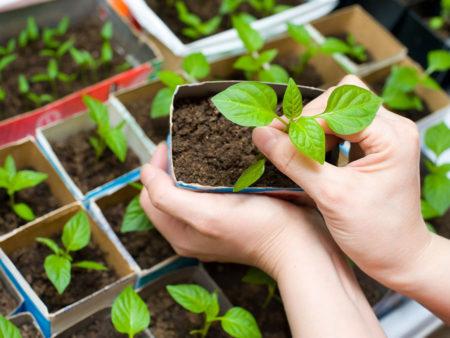 Бизнес на рассаде цветов и овощей